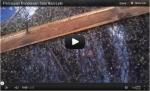 Video Penetasan Telur Ikan Lele